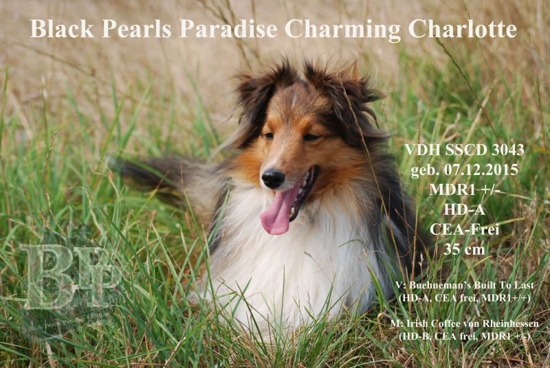 Black_Pearls_Paradise_Shelties_BestOf2018183.jpg